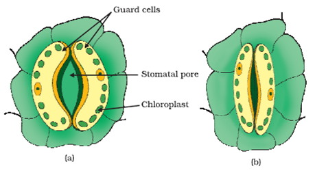 Protist additionally Life Process11 further 3877018 likewise Stock Illustration Diagram Trypanosoma Cell Brucei Gambiense Structure Labeled Protozoan Parasite Simplified Representation Image54092468 likewise Stock Illustration Anatomy Paramecium Vector Illustration Image52005775. on amoeba diagram labeled